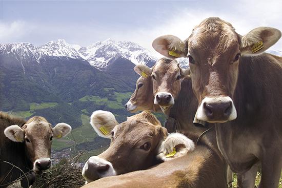 © Südtirol Marketing Gesellschaft/Ralf Kreuels